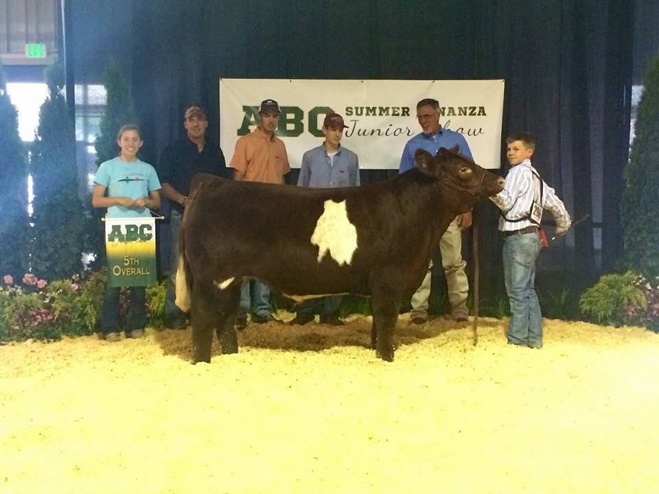 5th Overall Prospect Steer at the 2014 ABC Summer Bonanza Junior Show