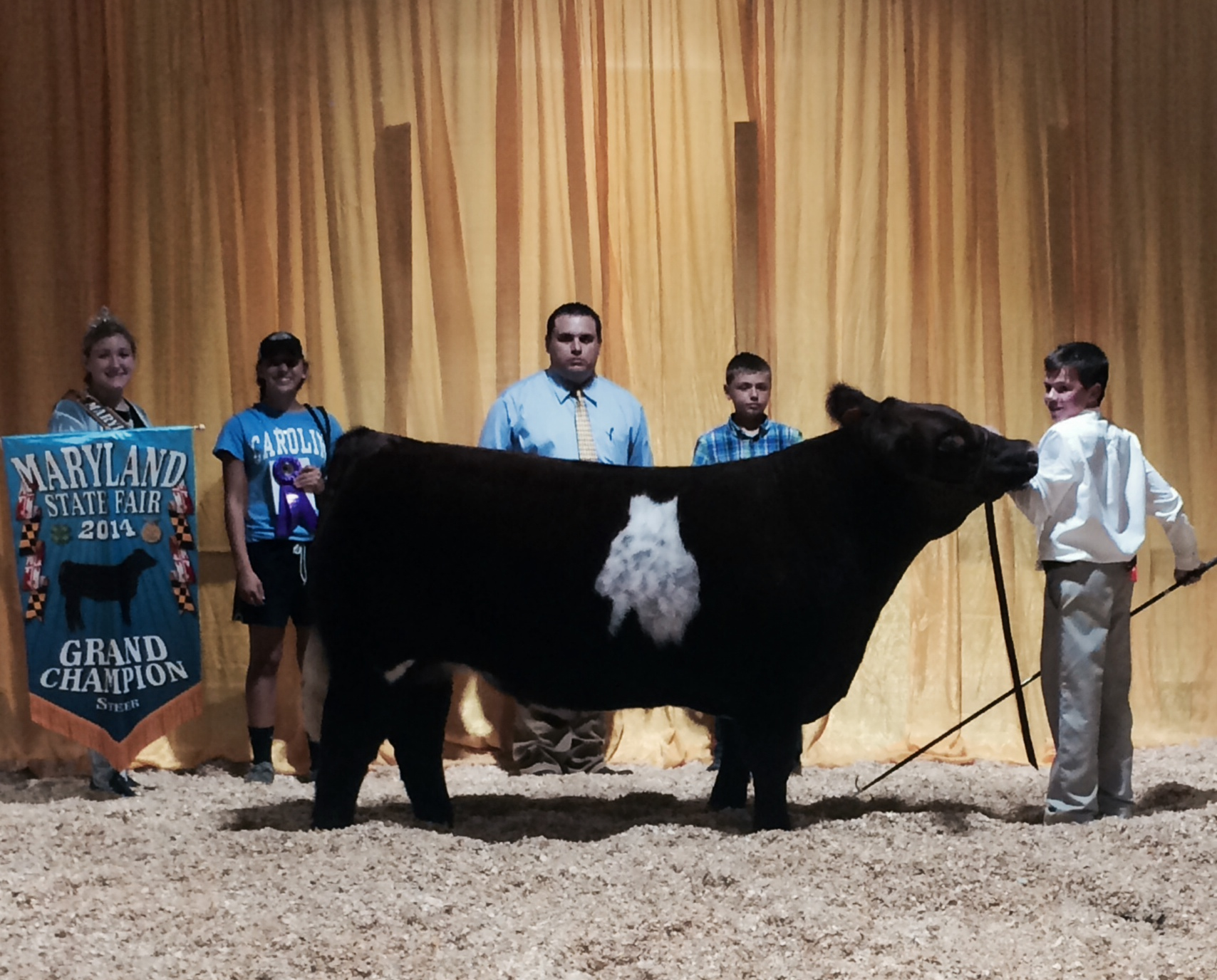 Grand Champion Market Steer at the 2014 Maryland State Fair.