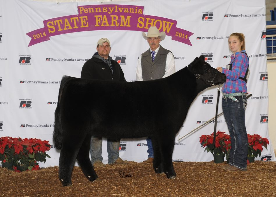 2014 Pennsylvania State Farm Show Grand Champion Maintainer Heifer Jr show.